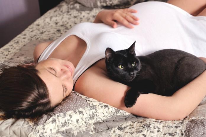 кошка смотрит на домового
