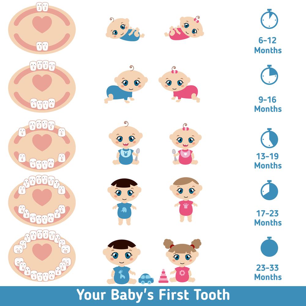 схема прорезывания молочных зубов у ребенка
