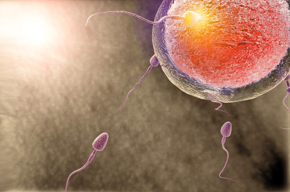 Сколько живет сперматозоид на поверхности уролог меня