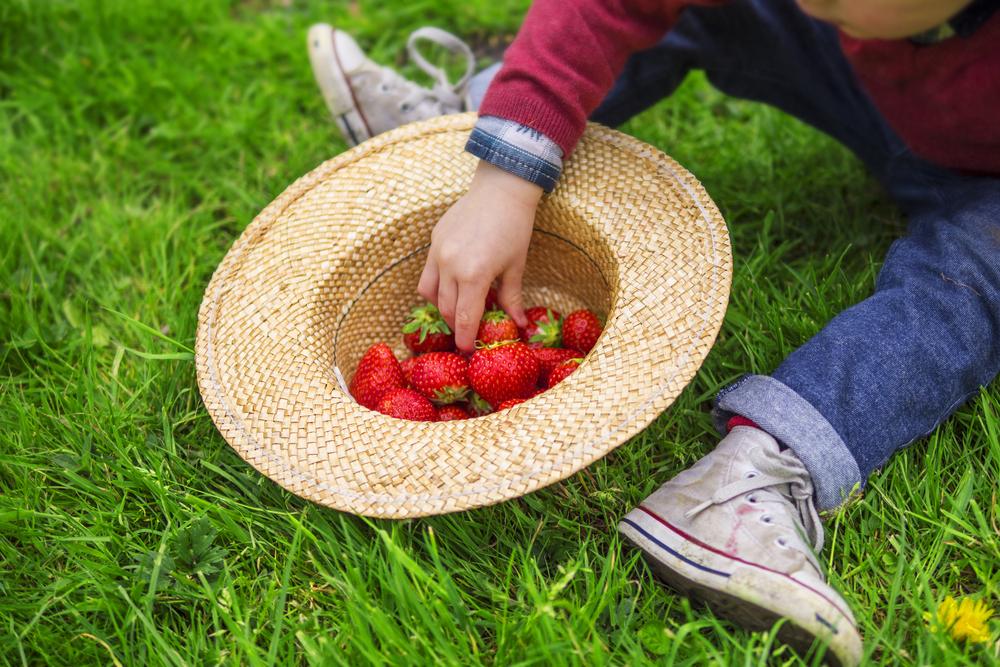 сезонная аллергия летом