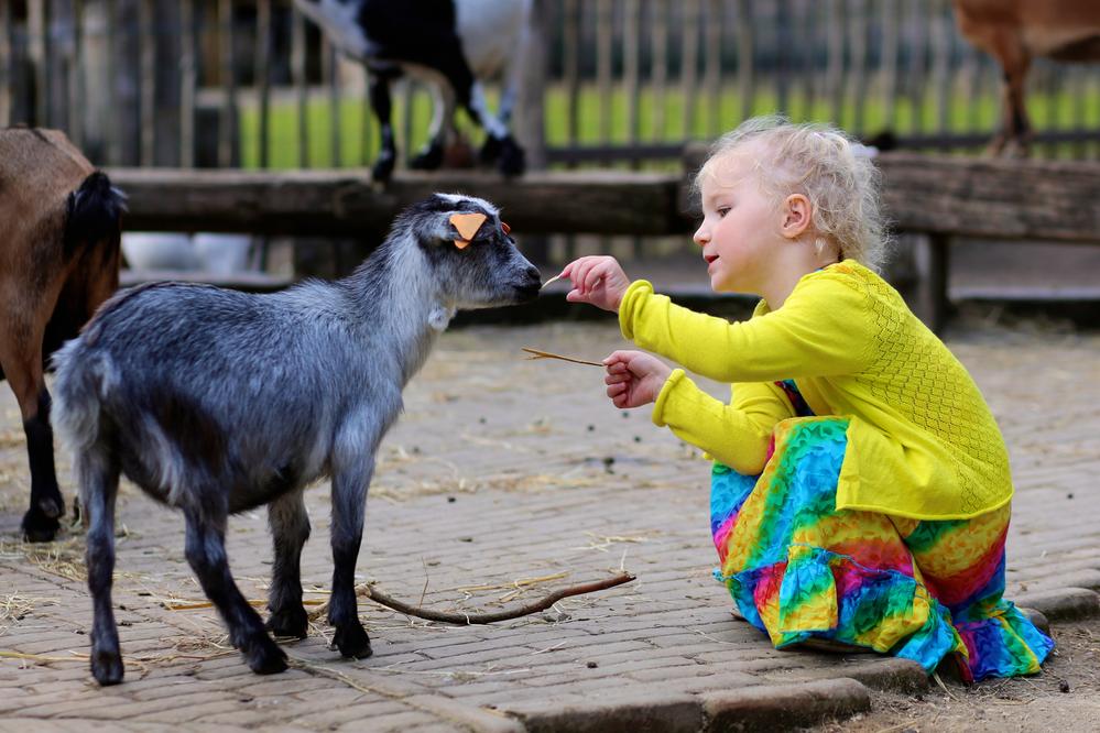 Цікаві факти про тварин  поділися цікавим про тварин зі своєю дитиною bb787e97f5dcb